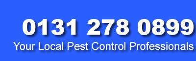 call Edinburgh Pest Controledinburgh fif west lothian and kinross on 0131 278 0899